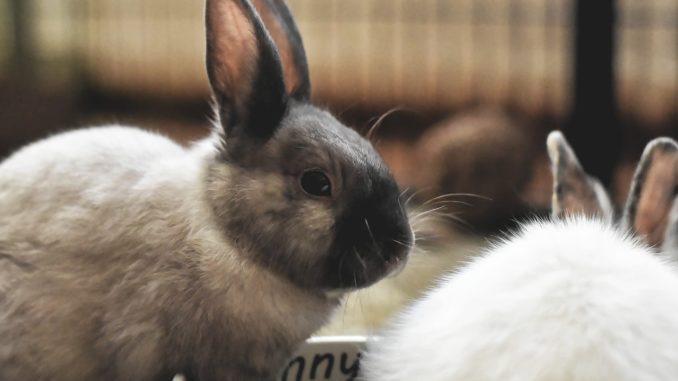 Wie ein guter Kaninchenstall aussehen sollte