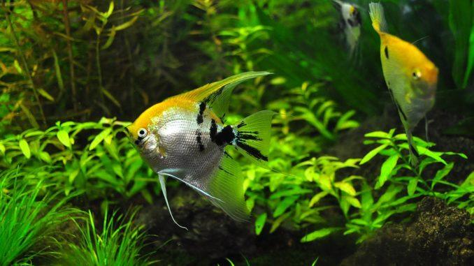 Aquaristik - wundervolles Hobby