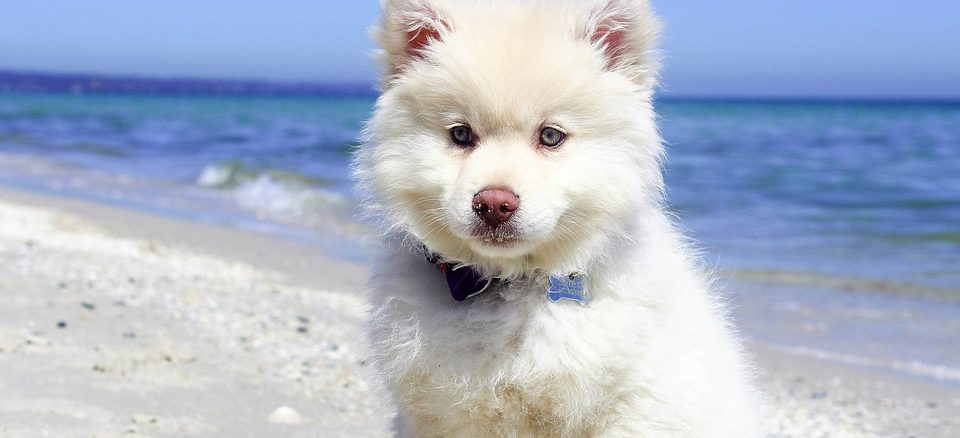 Urlaub mit Haustier