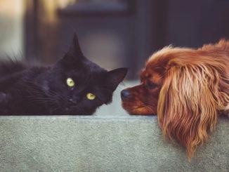 Warum haben wir eigentlich Haustiere?
