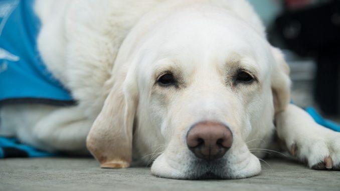 Die Hundehaftpflichtversicherung
