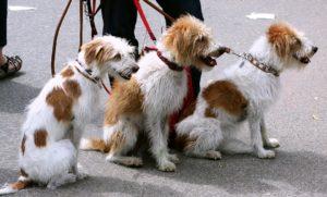 Geld verdienen als Hundesitter