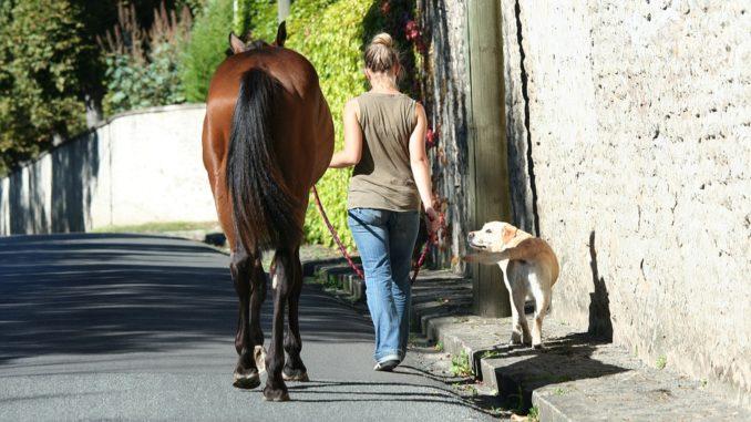 Für welche Tiere benötigt man eine Haftpflichtversicherung?
