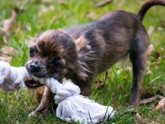 Hundespielzeug einfach selber basteln