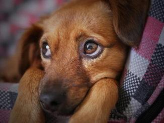 Die richtige Hundeversicherung finden