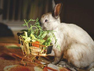 Natürliche Ernährung für gesunde Haustiere