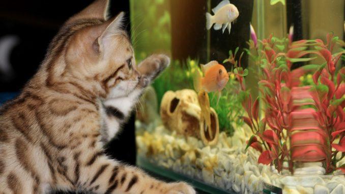 Welche tierischen Untermieter sind erlaubt?