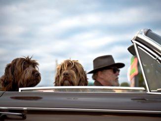 Für manche Haustiere wird die Urlaubsfahrt zum Höllentrip