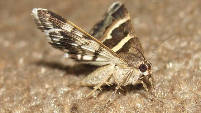 Mottenbekämpfungen in Haushalten mit Haustieren