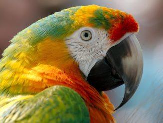 Vögel als Haustiere