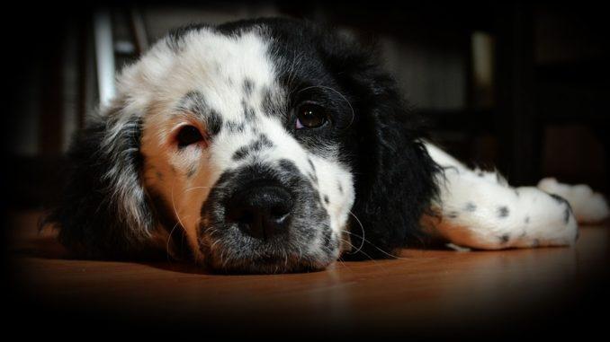 Hunderampe & Hundeleiter – die richtige Einstiegshilfe für Ihren Hund finden Erleichterung im Alltag