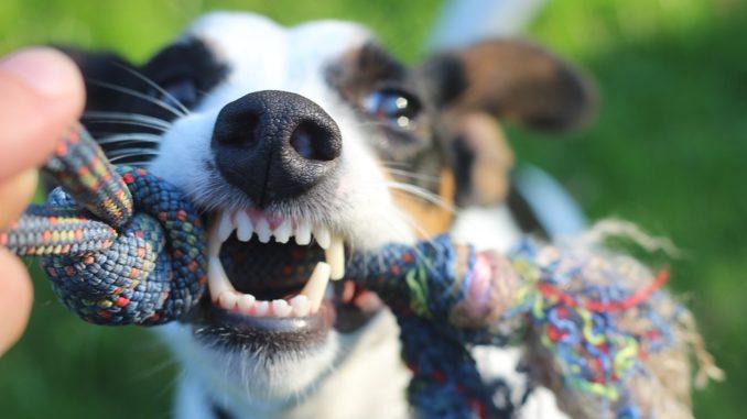Die Hundehaftpflicht schützt Sie - Damit uns die Liebe zum Hund nicht arm macht!