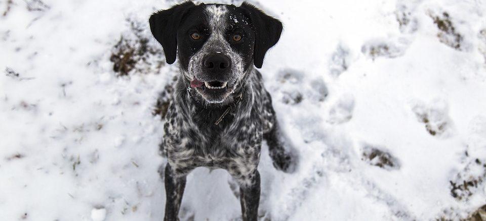 Geocaching mit Hund - neues Hobby?
