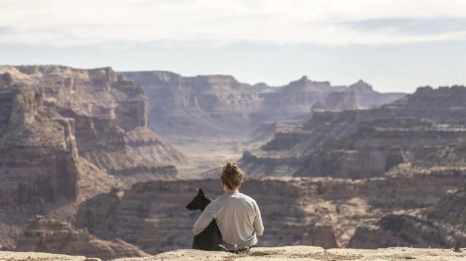 Fliegen mit dem Hund will gut geplant sein