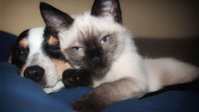 Corona-Virus für Halter von Hunden und Katzen