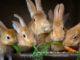 Artgerechte Fütterung von Kaninchen und Meerschweinchen