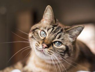 Toxoplasmose und Katzen