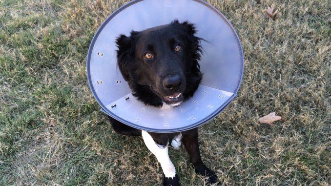 Notfallapotheke für Haustiere - Apotheke für Haustiere