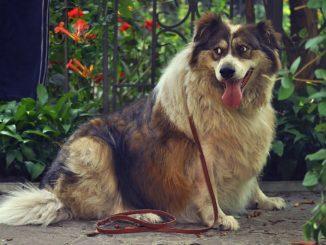 Falsche Ernährung bei Hunden Übergewicht und Gesundheitsproblemen