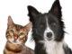 Schock bei Haustieren / Tieren