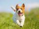 Odontolithiasis – Zahnstein bei Haustieren