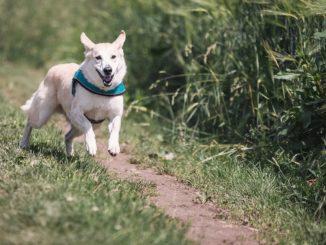 Was kann ich tun, wenn mein Hundentlaufenist?