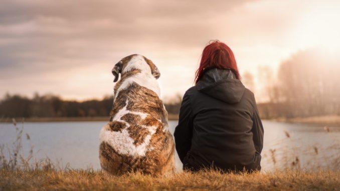 Tierbedarf auch Online kaufen: Ist das sinnvoll?