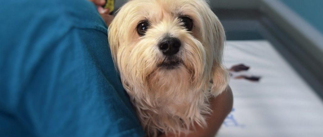 Tierkrankenversicherung: Ab wann sinnvoll?