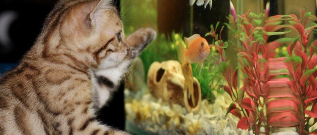 Aquarium in Kleinformat - das Nano-Becken