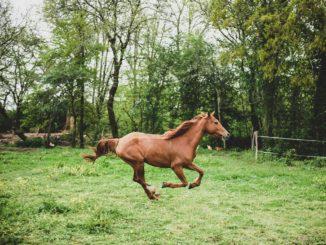 Pferde verkaufen und kaufen