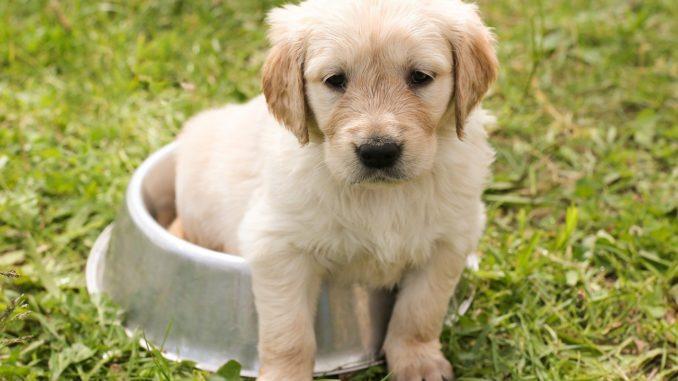 Natürliche Tierpflege- und Nahrungsergänzung für Tiere