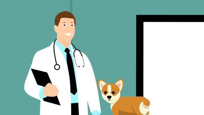 Die 7 häufigsten Krankheiten bei Hunden: Symptome und Behandlung