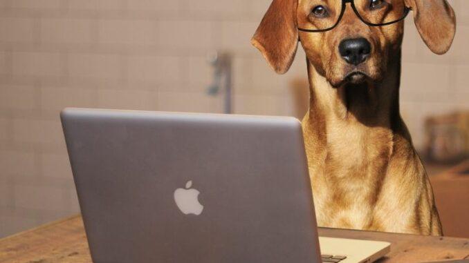 Hundefutter Ratgeber - 7 Fragen und unsere 7 Antworten