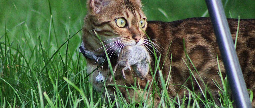Schädlinge fernhalten, ohne das eigene Haustier zu vergiften