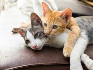 Vorteile von getreidefreiem Katzenfutter