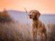 Was ist eigentlich der Unterschied zwischen Jagdhunde und Haushunde