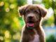 Was sind häufige Fehler, die Ersthundebesitzer machen?