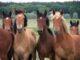 Verdauung: Stoffwechsel bei Pferden anregen